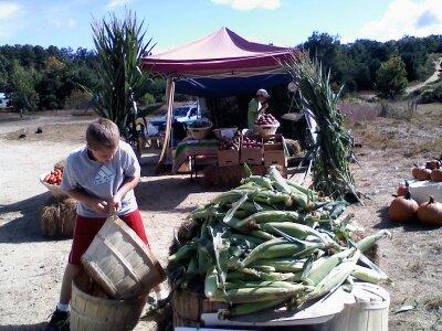 boy hauling corn